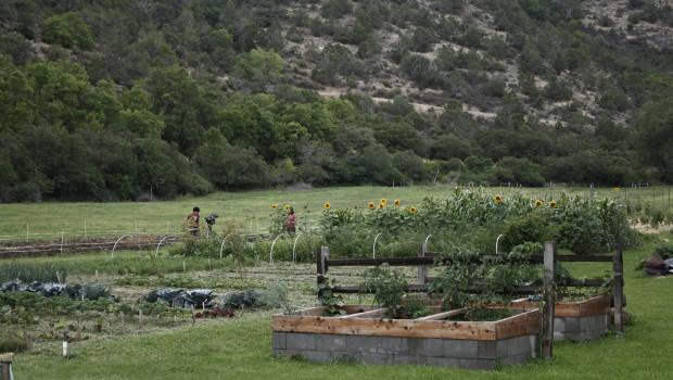 Colorado Organic Farmers