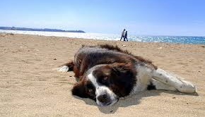 dog-relaxing-on-beach