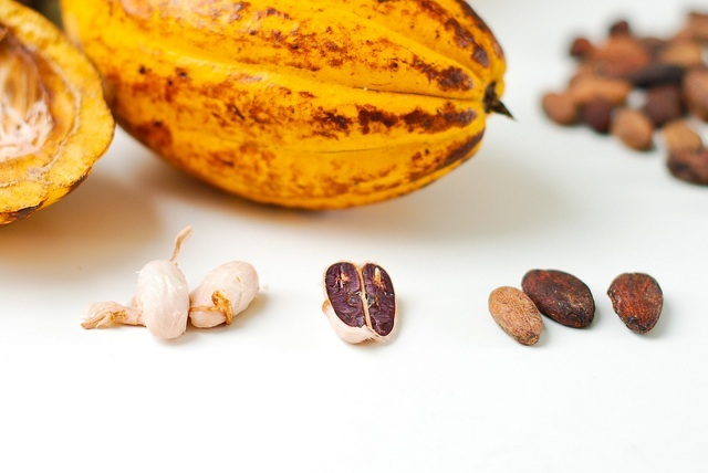 cacaopodsbeans