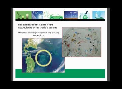Webinar Recap: How Businesses Can Reduce Single Use Plastics
