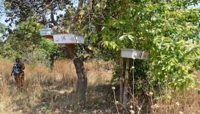 Tanzania beekeeping