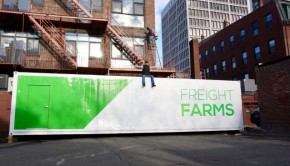 Organic vegetables grow inside a Leafy Green Machine from Freight Farms