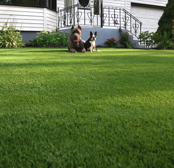 hidden costs of traditional lawncare