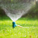 Hidden Costs of Traditional Lawn Care